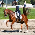 Jackie and Killiarc Showing Intermediare I at Championships