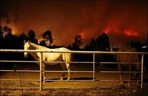 horses_fire