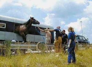 horse_escaping_trailer1